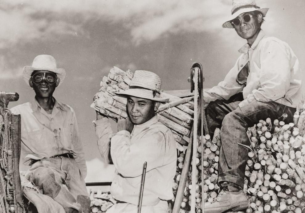 Filipino laborers on a sugar plantation circa 1950 [Credit: http://www.honolulumagazine.com/]